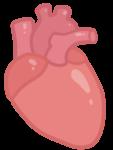 anatomi ikon